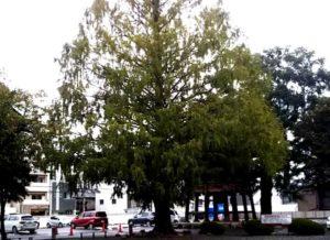 西別院の樹木